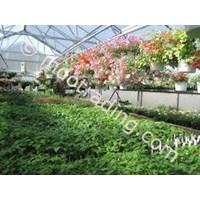 Jual Plastik Uv Untuk Atap Greenhouse Tanaman Di Kendari 2