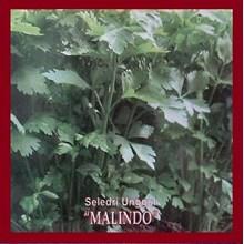 Benih Seledri MALINDO