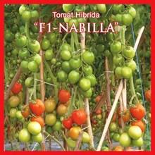 Benih Tomat F1-NABILA