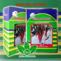 Jual Benih Cabe Merah Besar BALI-77