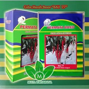 Benih Cabe Merah Besar BALI-77
