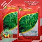 Benih Kangkung