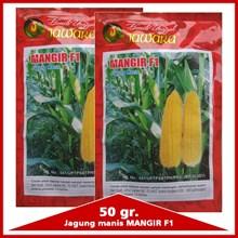 Benih Jagung Manis MANGIR F1 50 gr.