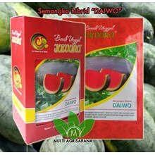 The seeds of the Watermelon DAIWO 5 g