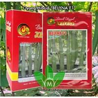 Distributor benih Oyong BELYNA F1 3