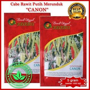 Benih Cabe rawit putih  CANON  5 gr.