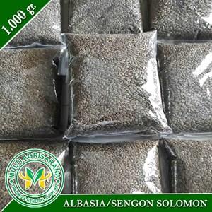 Benih Bibit Sengon Solomon 1 kg.