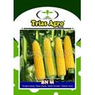 Benih Jagung Manis BN 44 250 gr. 2