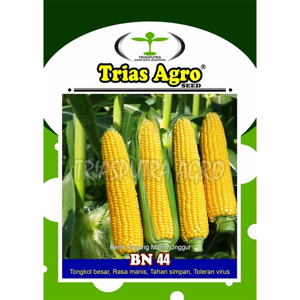 Benih Jagung Manis BN 44 250 gr.