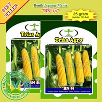 Benih Jagung Manis BN 44 25 gr.