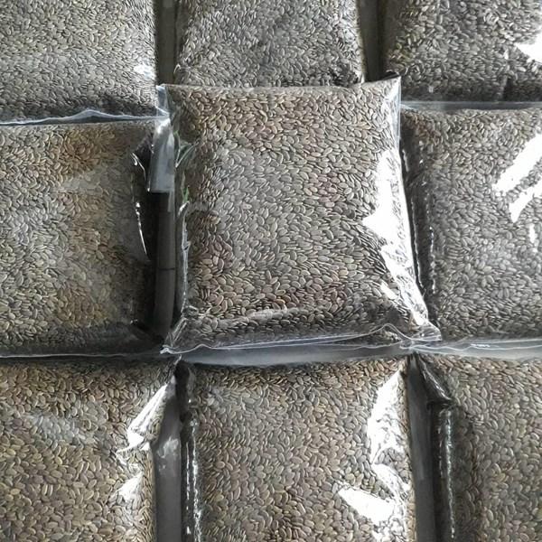 Bibit Benih Sengon Solomon 500 gram.