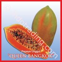 Distributor Benih Pepaya Bangkok