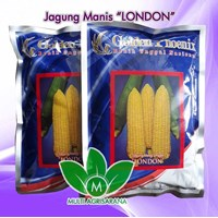 "Benih Jagung Manis ""LONDON"""