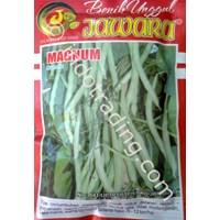 Distributor Benih Buncis biji hitam MAGNUM 100 gr. 3