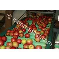 Food and Beverage Conveyor 1