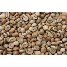 Sidikalang coffee bean