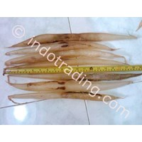 Perut Ikan Malong 1