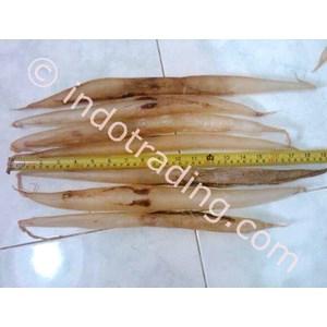 Perut Ikan Malong