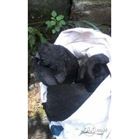Sell Rosewood Charcoal  2