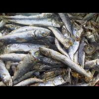 Jual Ikan Asin