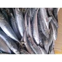 Jual Ikan Layang Beku 2