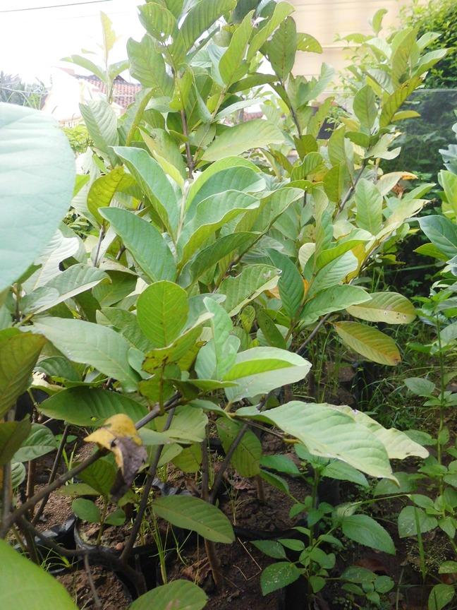 PinBB:5E4B9886 | Jual Green Coffee Bean, Kopi Hijau Penurun Berat Badan, Green Coffee Diet