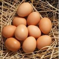 Jual Telur