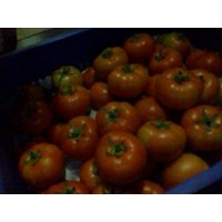 Jual Tomat Beef