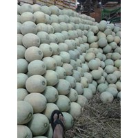 Distributor Buah Segar Melon 3