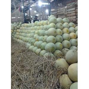 Buah Segar Melon
