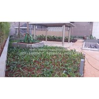 Beli DRAINAGE CELL - DRAINAGE  ROOF GARDEN 4