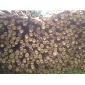 Bambu Uk 8-9