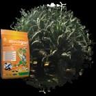 MYCOgold Fertilizer 2