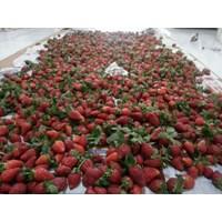Jual Strawberry Fresh 2