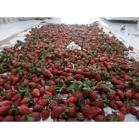 Strawberry Fresh 1