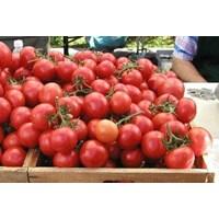 Tomat Cherry 1