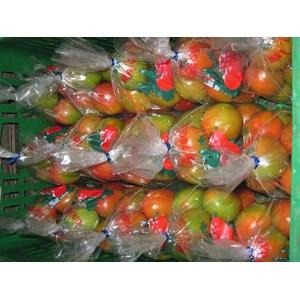 Tomat Besar