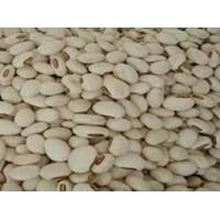 Kacang Koro 1
