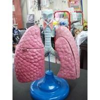 alat peraga pendidikan paru-paru