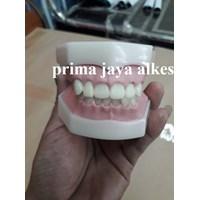 model gigi keras
