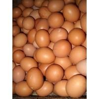 Telur Ayam 1