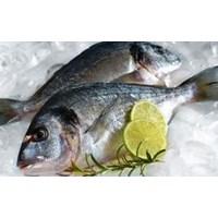 Ikan Segar 1