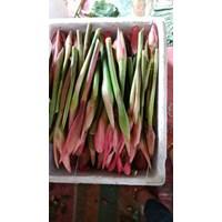 Jual Bunga Kecombrang-Kincung-Honje-Kantan 2