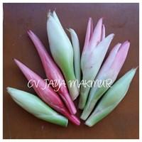 Bunga Kecombrang-Kincung-Honje-Kantan Murah 5