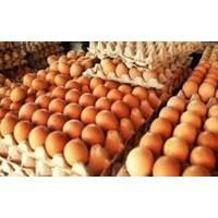 Jual Telur Ayam