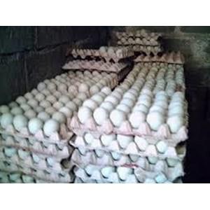 Telur Bebek