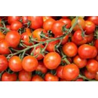 Jual Tomat Cerry