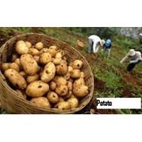 Distributor Sayuran Segar 3
