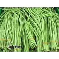 Sayuran Segar Murah 5