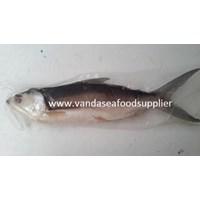 Jual Ikan Bandeng Cabut Duri